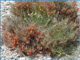 Растения на южном берегу Иссык-куля